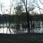 Alberi sott'acqua al parco Lambro