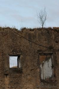 Un albero cresce su un muro diroccato